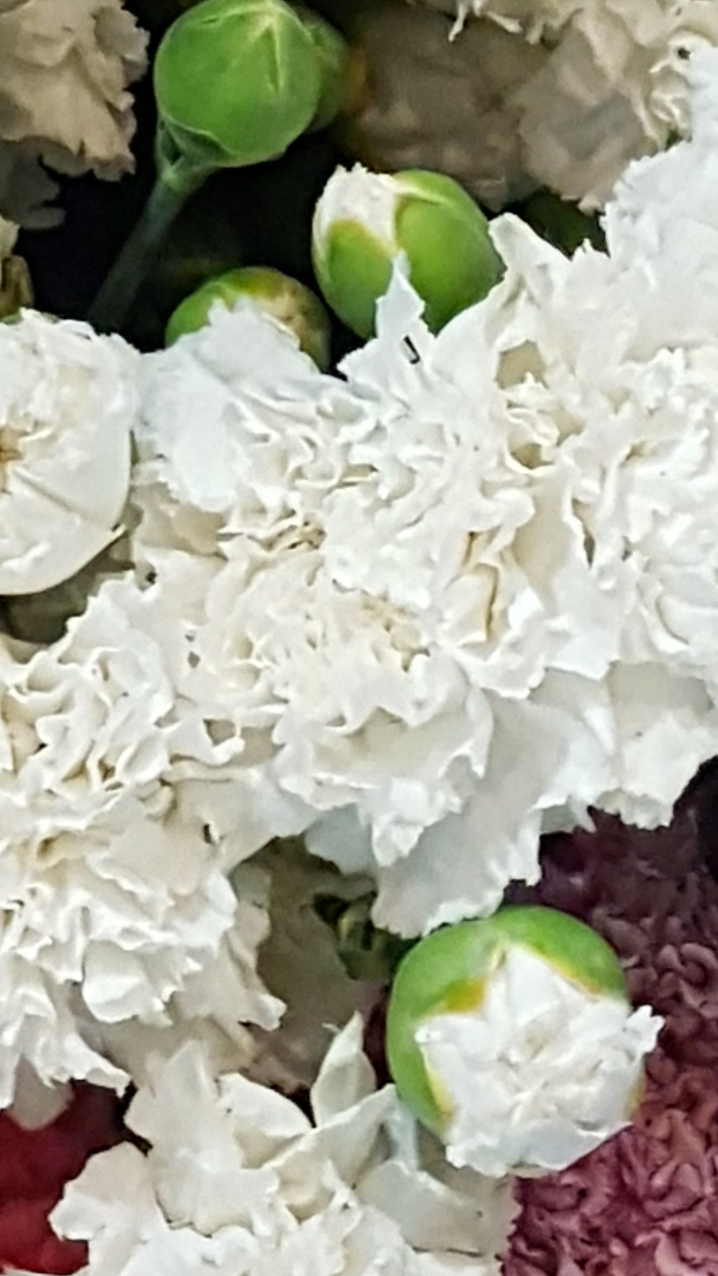 CLAVEL GIGANTE BLANCO chabaud   dianthus 50 semillas seeds